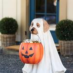 Life-Size Ghost Dog Halloween Candy Bowl