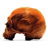 Lifesize Anatomically Correct 100% Chocolate Human Skulls