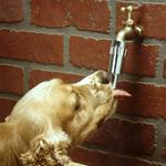 Lixit - Automatic Faucet Waterer for Dogs