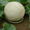 Melon and Squash Garden Cradles