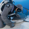 Neptunic Sharksuit - Sharkproof Chainmail Dive Suit