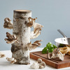 Organic Oyster Mushroom Growing Log Kit