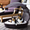 Outdoor Rattan Chaise Lounger For Dogs