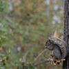 Picnic Table Squirrel Feeder