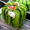 Pyramid & Square Shaped Watermelons