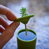 rootcup - Grow New Plants From Plant Cuttings