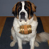 St. Bernard Barrel Collars