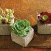 Succulent Cube Garden