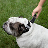 Supercollar - Dog Collar With A Built-In Leash