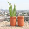 Terracotta Mason Jar Pots