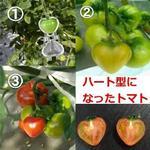Tomato Heart Molds
