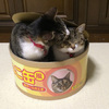 Tuna Can Cat Scratcher / Bed
