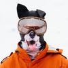 Ultra-Realistic Animal Ski Masks