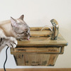 Wall-Mounted Cat Drinking Fountain
