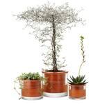 Wet Pots - Self-Watering Terracotta Pots