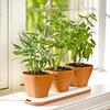 Windowsill Herb Garden Pots Adjust to Three Heights