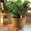 Wine Bottle Plant Nanny Watering Stakes