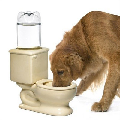 Toilet Dog And Cat Water Bowl The Green Head