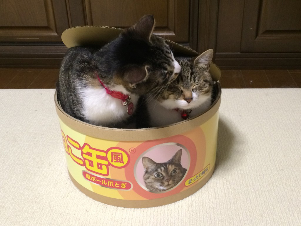 Tuna Can Cat Bed