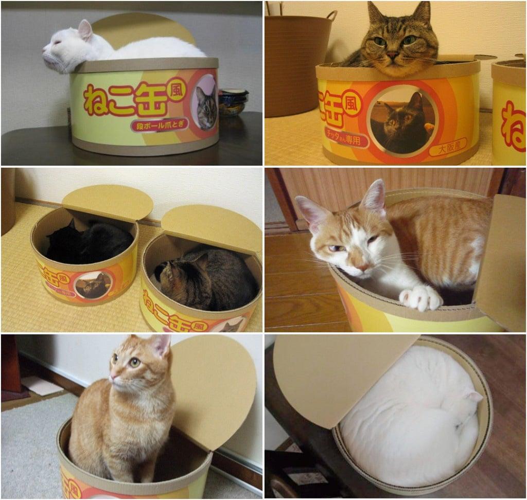 Tuna Can Cat Scratcher / Bed - The Green Head - photo#42