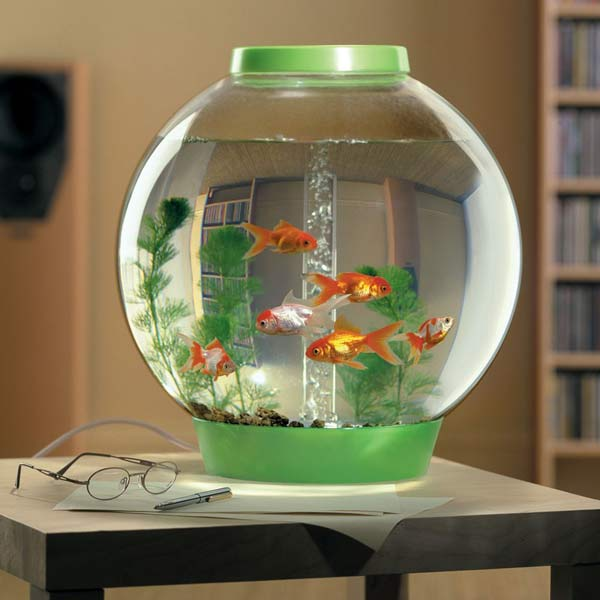 Tropical fish bowl fish bowl 2017 fish tank maintenance for Self cleaning fish tank walmart