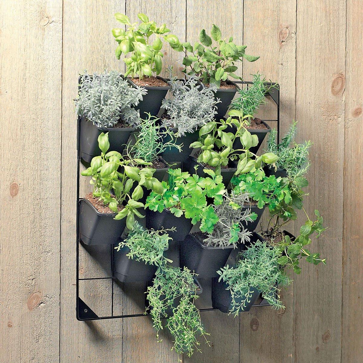 Vertical Wall Garden The Green Head