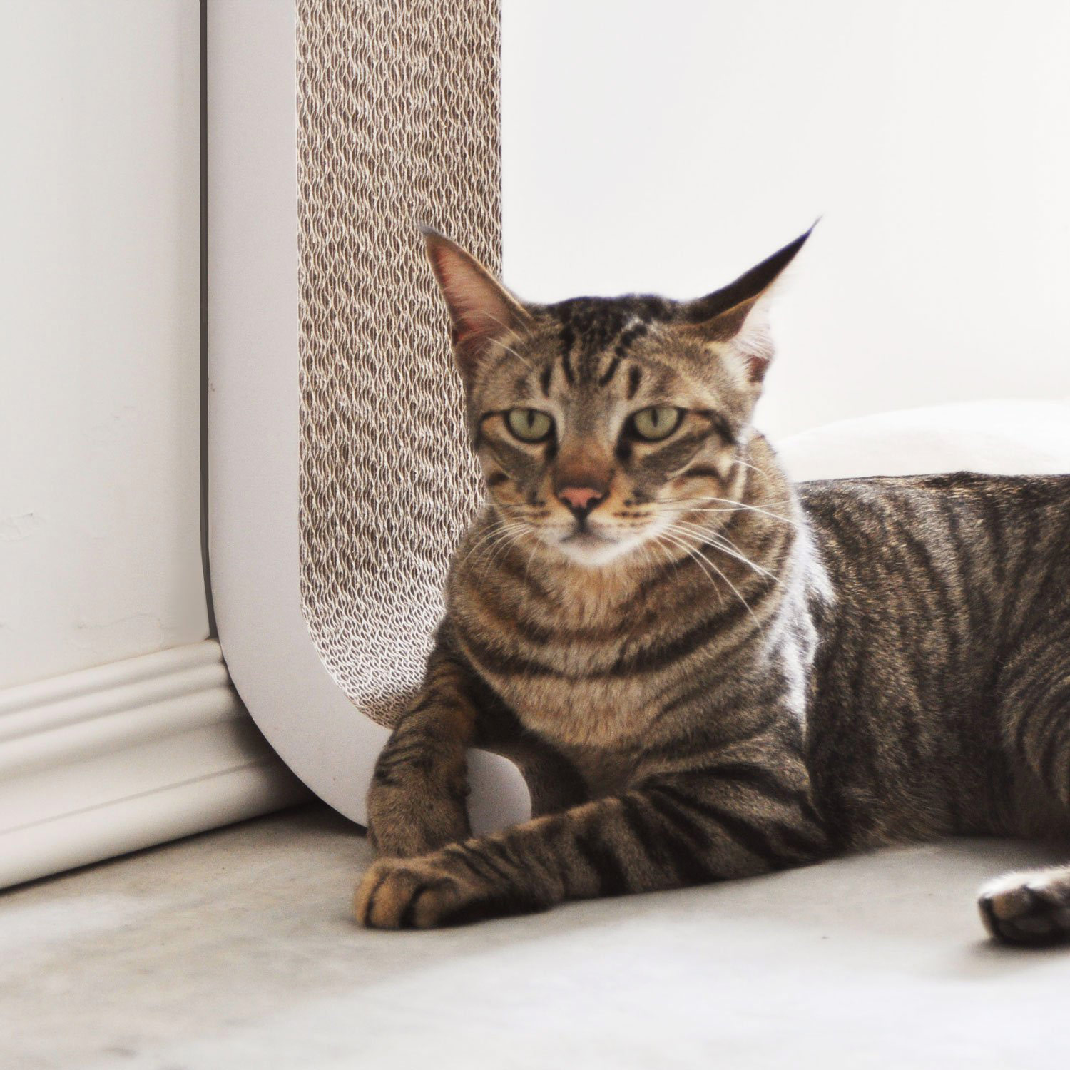 Wall Mounted Vertical Cat Scratching Post