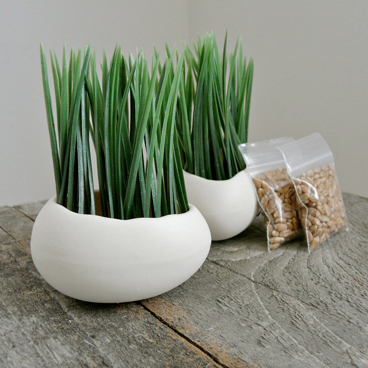 Wheatgrass Egg Planters The Green Head
