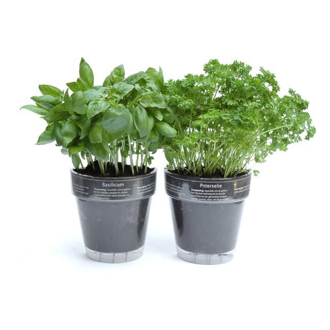 Windowherbs Transparent Suction Cup Herb Pots