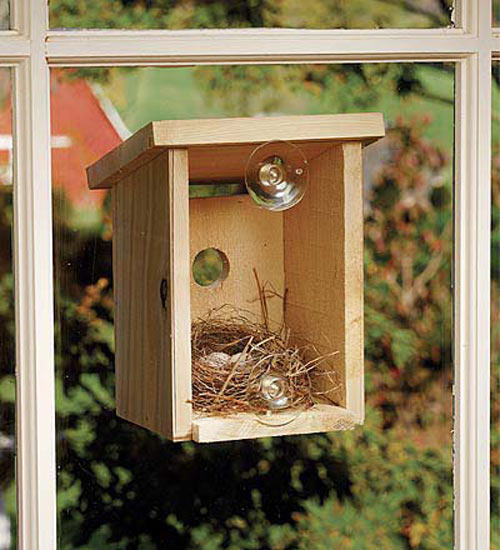 Window View Bird Nest Box The Green Head
