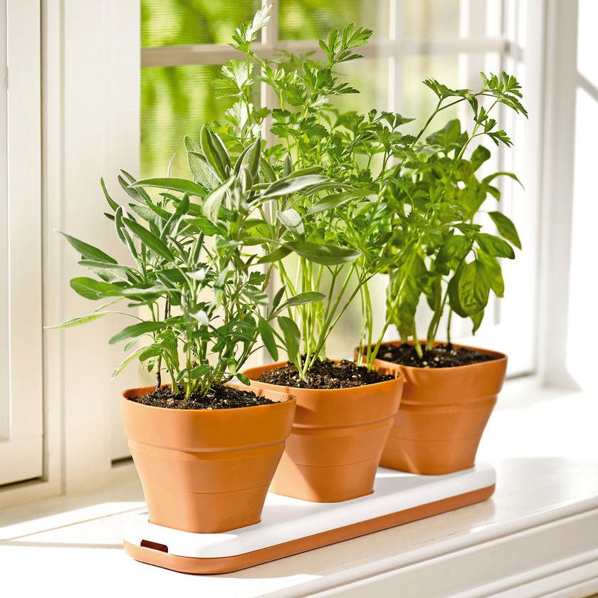 Windowsill Herb Garden Pots Adjust To Three Heights