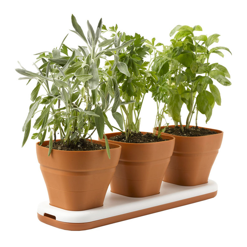 Windowsill herb garden pots adjust to three heights the Kitchen windowsill herb pots