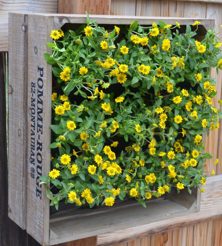 Wine Crate Vertical Garden The Green Head
