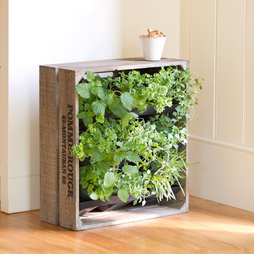 Wine Crate Vertical Wall Garden The Green Head