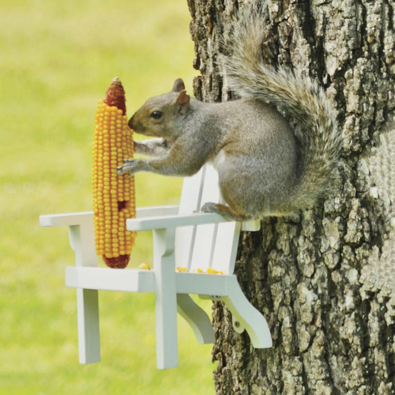 Adirondack Chair Squirrel Feeder The Green Head