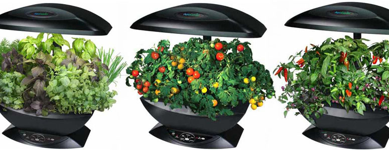 AeroGarden Automated Indoor Kitchen Garden The Green Head