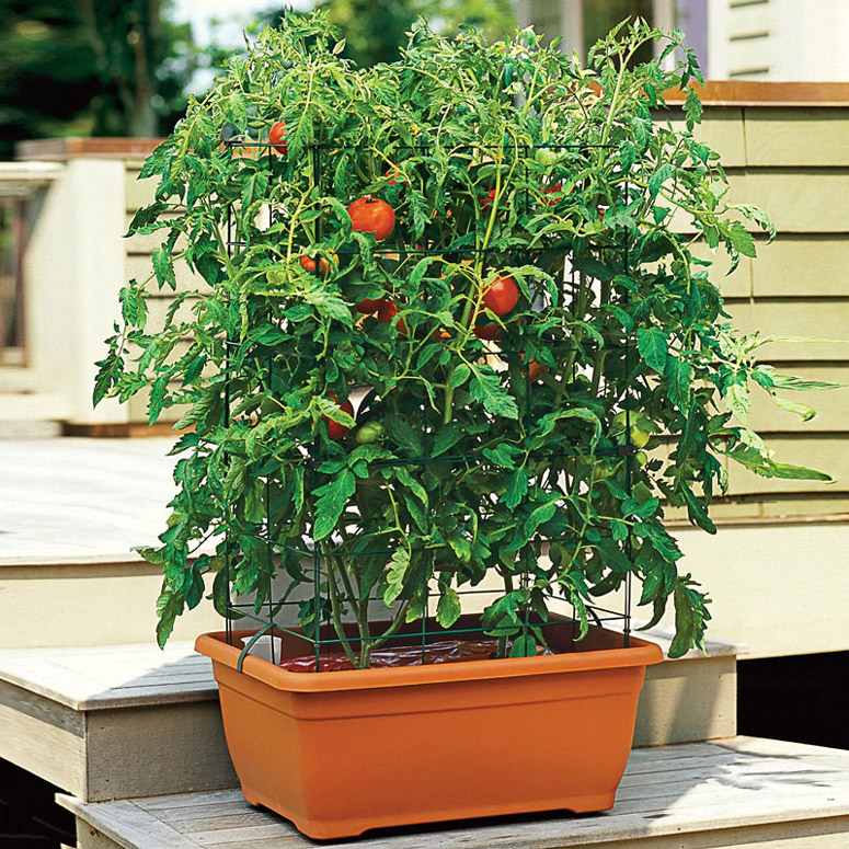 All In One Tomato Success Kit