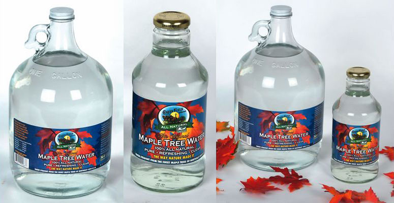 Amish Maple Tree Water