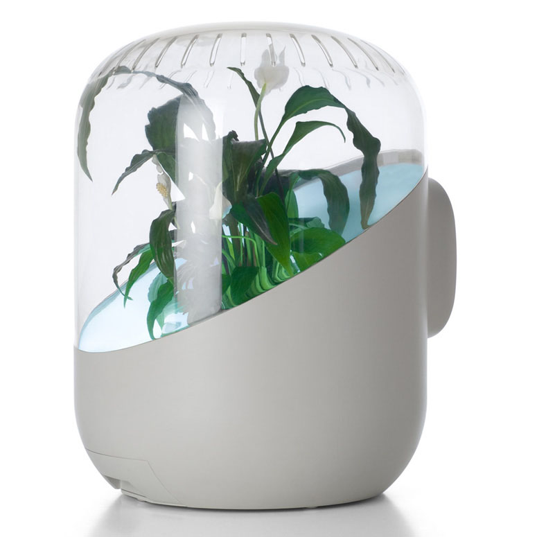 andrea - plant-powered air purifier