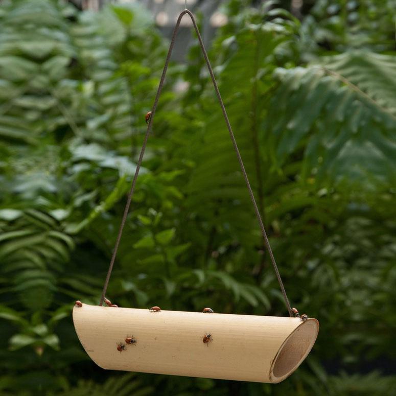 Bamboo Ladybug Feeder - The Green Head