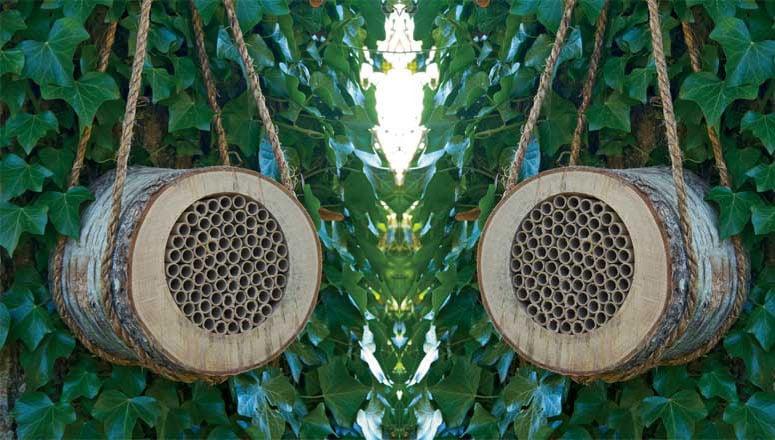 Birch Bee Log The Green Head