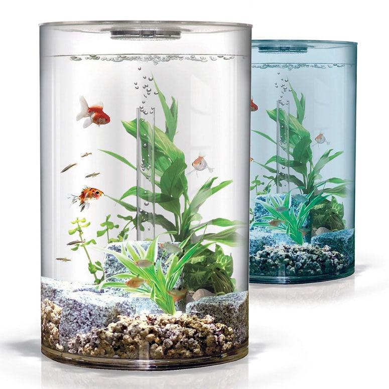 Biube Pure Aquarium The Green Head