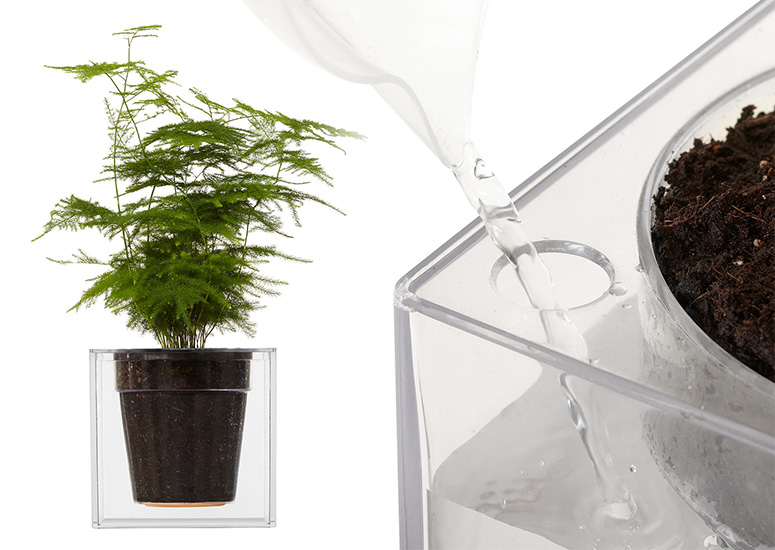 Boskke Clear Cube Self Watering Planter The Green Head