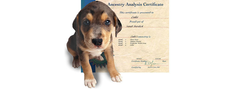 Canine Genealogy Kit