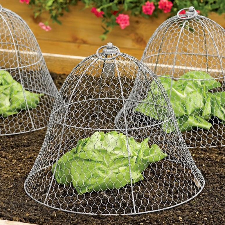 Chicken Wire Plant Cloche The Green Head