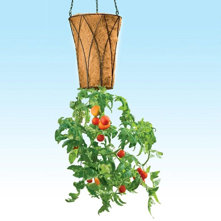 Deluxe Revolution Upside Down Tomato Planter The Green Head