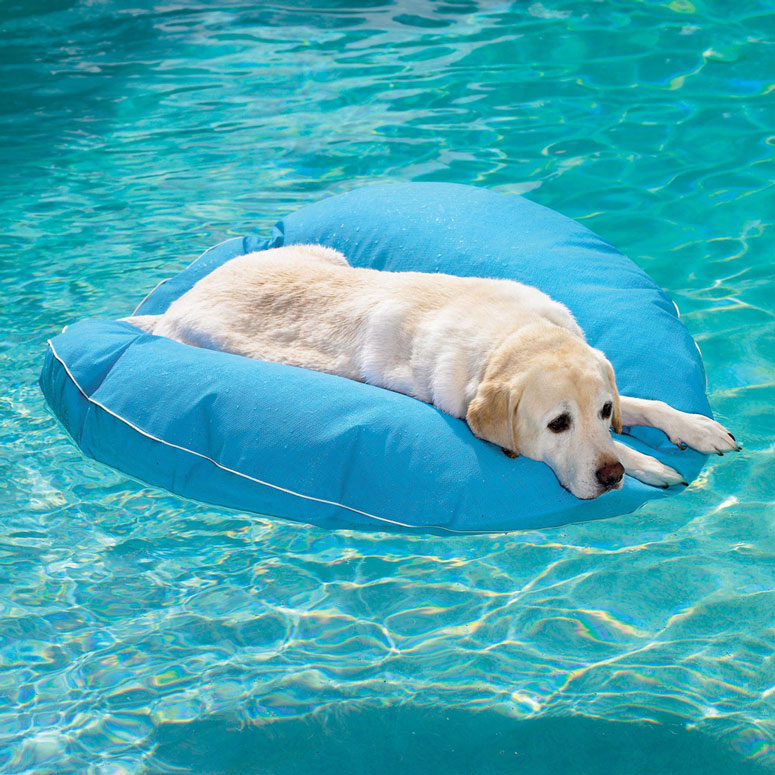 Dog Pool Float The Green Head
