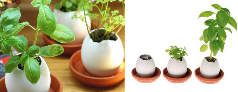 Egglings - Plants You Hatch From an Egg!