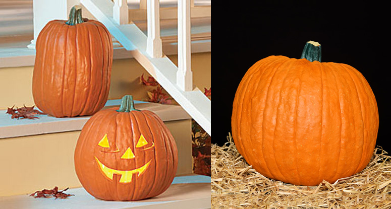 Faux Pumpkins - Realistic, No Mess, Flameless, Carvable ...