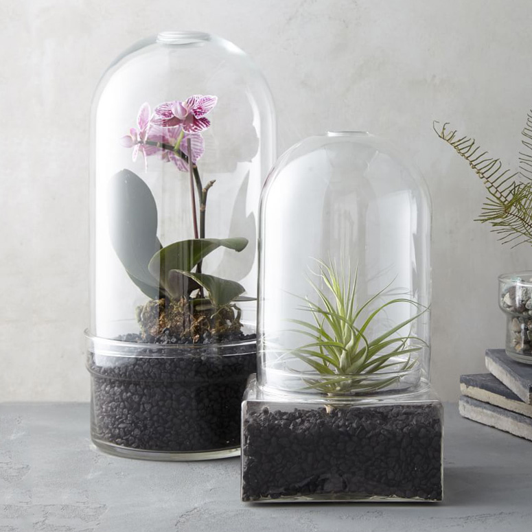Glass Cloche Terrariums
